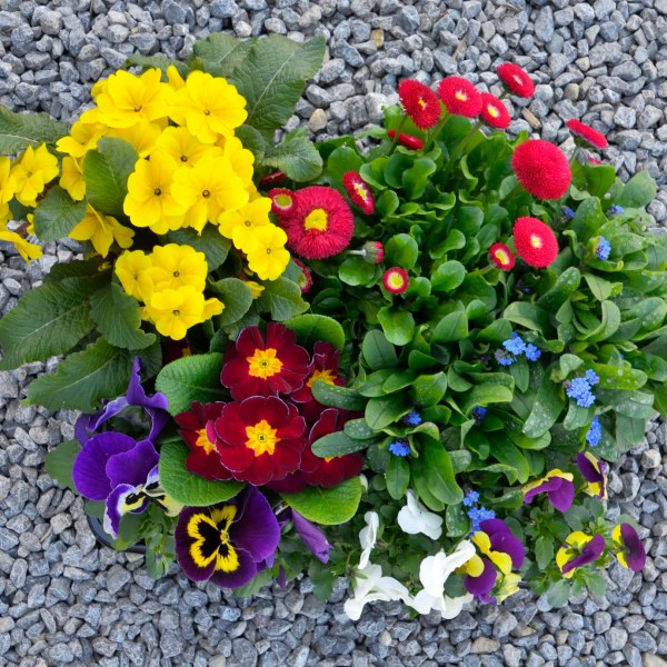 Mix-Kiste mit 10 Pflanzen